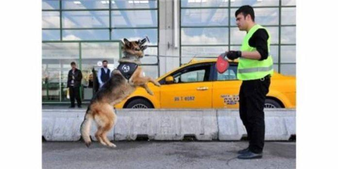 Aşti'nin İlk Uzman Köpeği RİO
