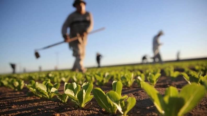 Çiftçiye Müjde: Mazot Parasının Yarısı Devletten