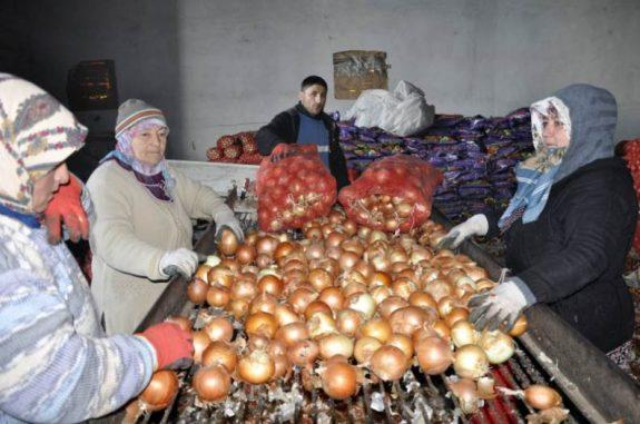 Soğan Üreticiyi Zora Soktu