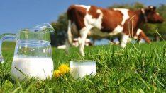 Toplanan İnek Sütü Nisanda Arttı!